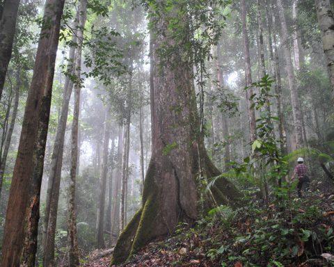 good shot id hutan kalimantan